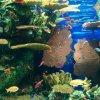 shanghai-ocean-aquarium